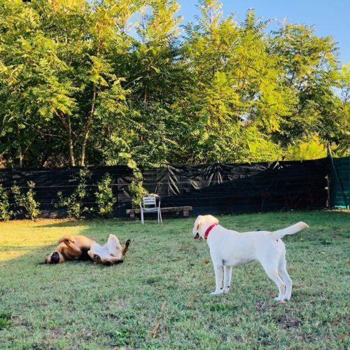 Puppy Class | 4 Ottobre 2019